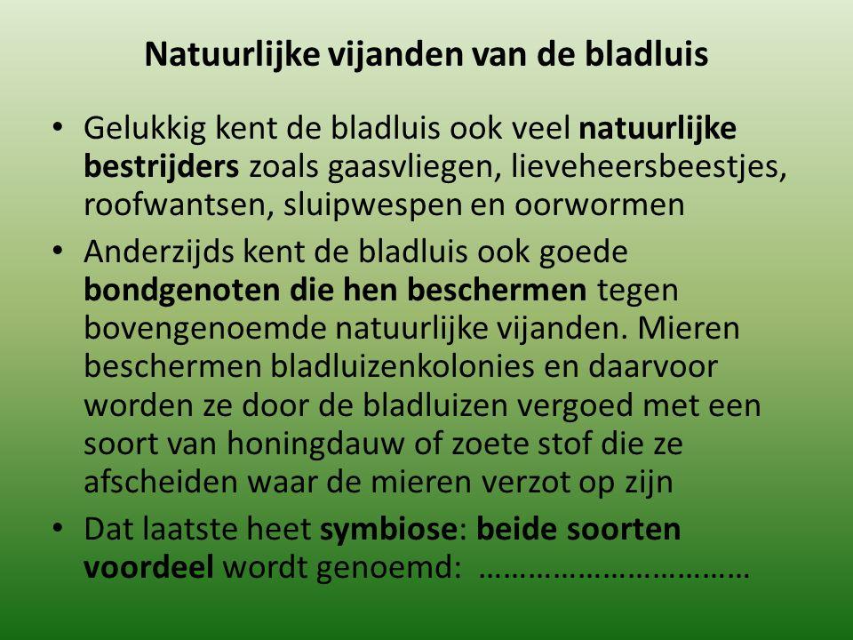 Natuurlijke vijanden van de bladluis