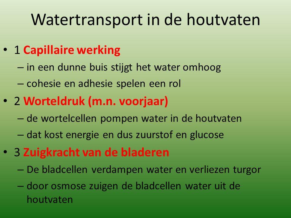 Watertransport in de houtvaten