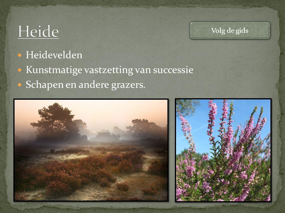 Heide Heidevelden Kunstmatige vastzetting van successie