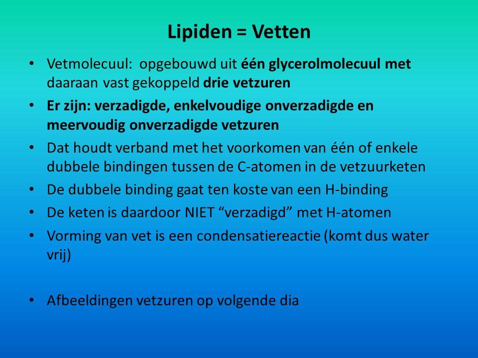 Lipiden = Vetten Vetmolecuul: opgebouwd uit één glycerolmolecuul met daaraan vast gekoppeld drie vetzuren.