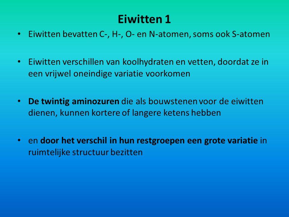 Eiwitten 1 Eiwitten bevatten C-, H-, O- en N-atomen, soms ook S-atomen