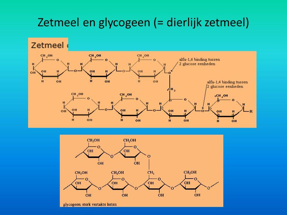 Zetmeel en glycogeen (= dierlijk zetmeel)