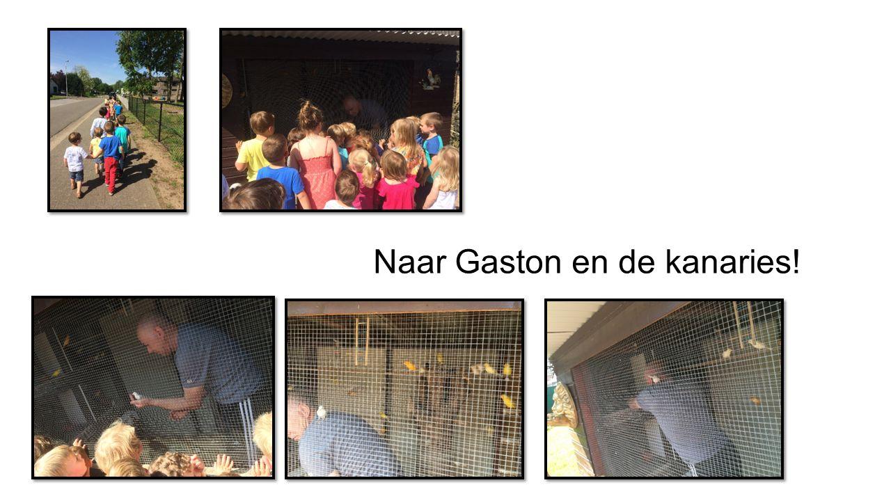 Naar Gaston en de kanaries!