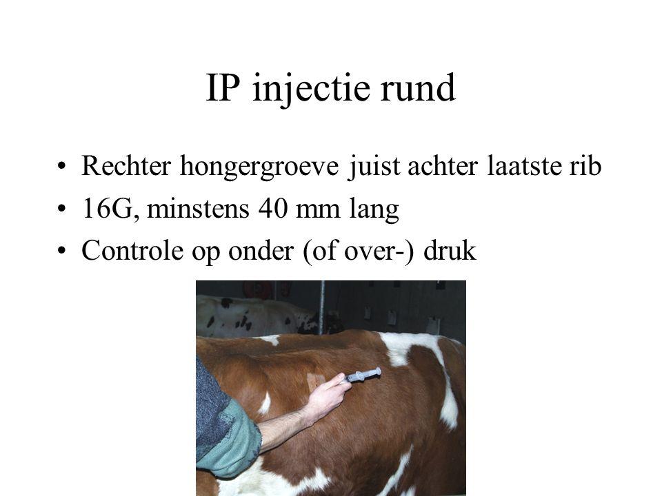 IP injectie rund Rechter hongergroeve juist achter laatste rib
