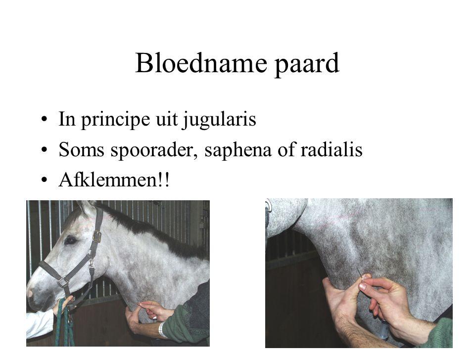 Bloedname paard In principe uit jugularis