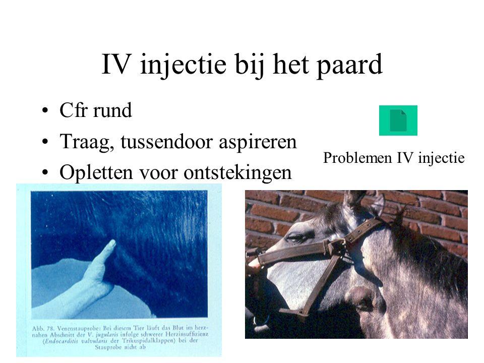 IV injectie bij het paard