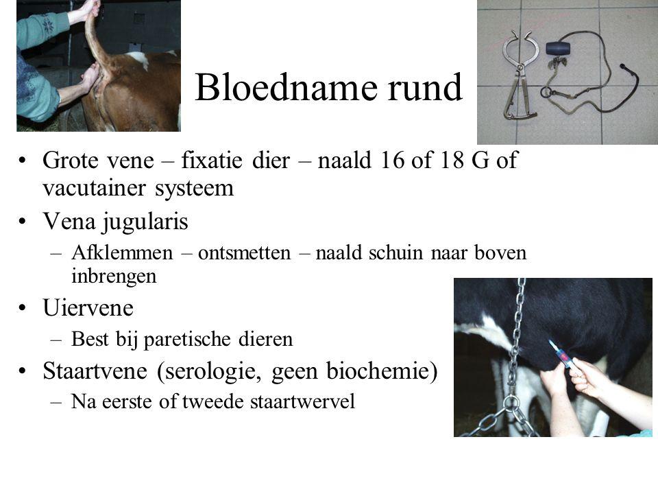 Bloedname rund Grote vene – fixatie dier – naald 16 of 18 G of vacutainer systeem. Vena jugularis.