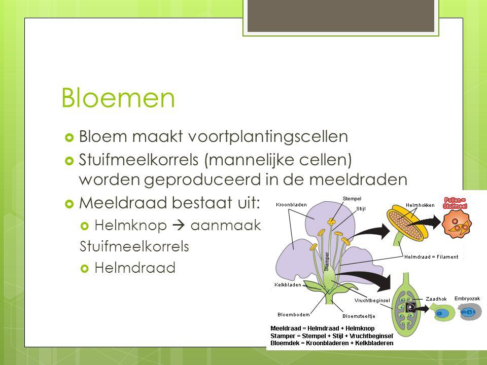 Bloemen Bloem maakt voortplantingscellen