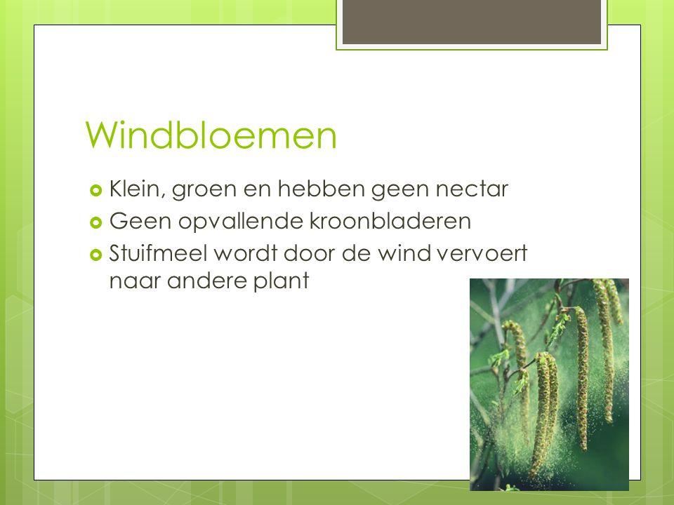 Windbloemen Klein, groen en hebben geen nectar