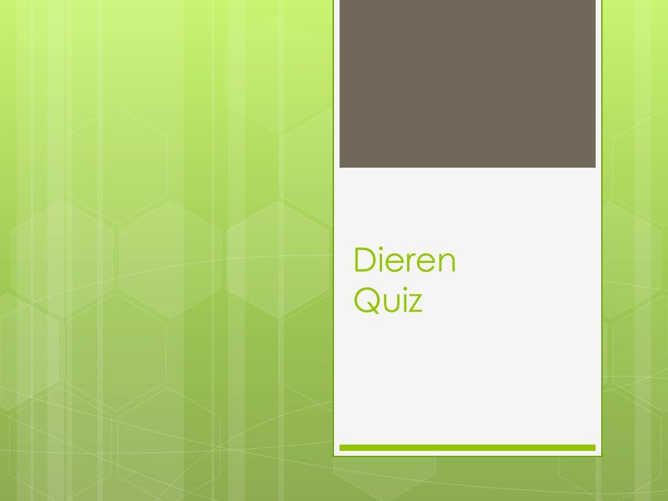 Dieren Quiz