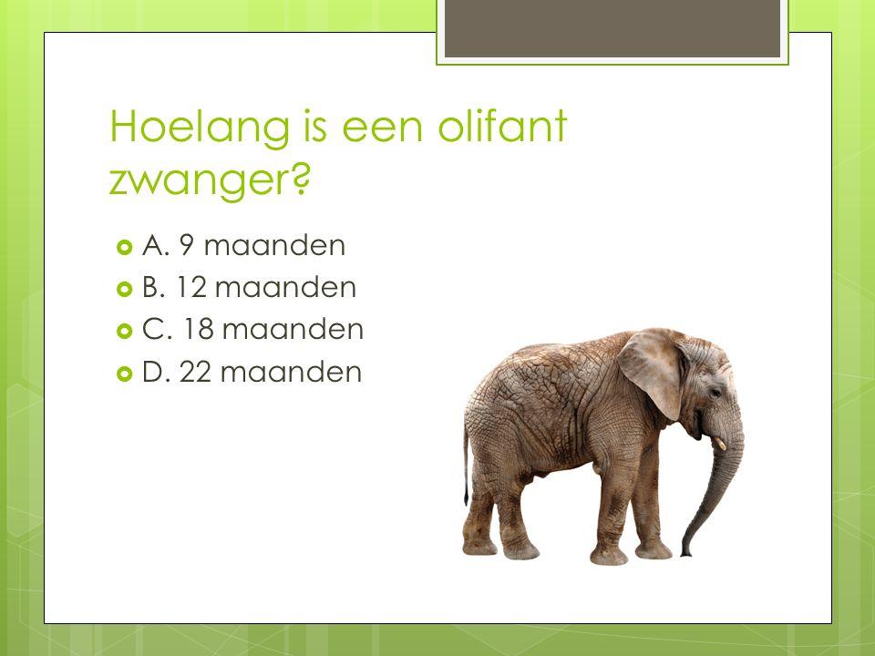 Hoelang is een olifant zwanger