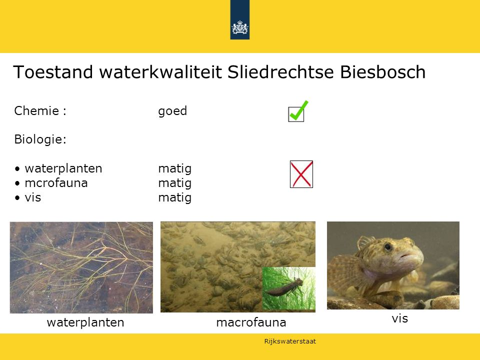 Toestand waterkwaliteit Sliedrechtse Biesbosch
