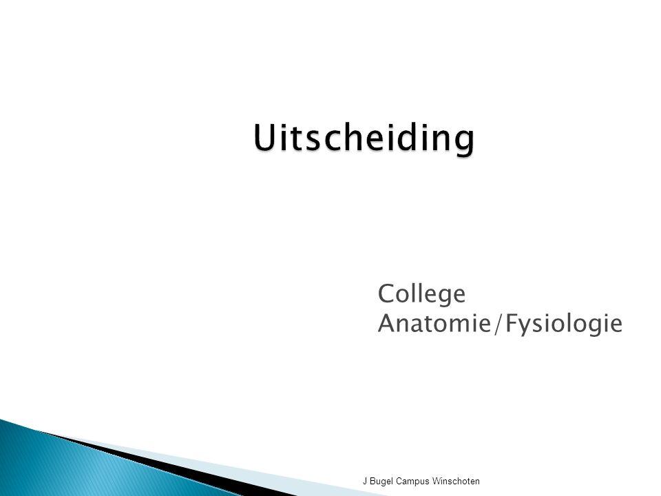 College Anatomie/Fysiologie