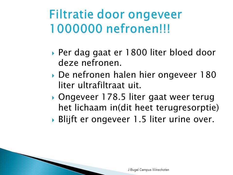 Filtratie door ongeveer 1000000 nefronen!!!