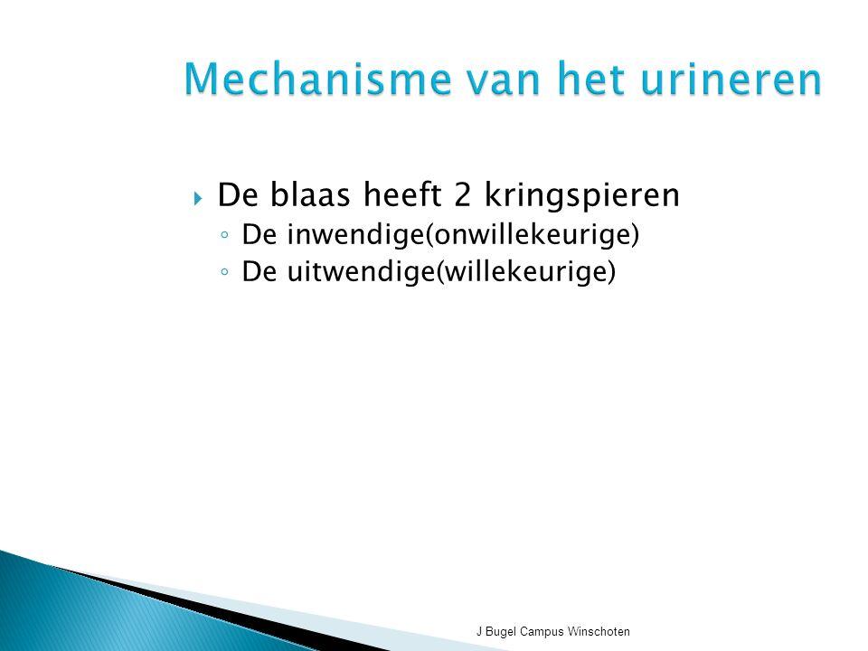 Mechanisme van het urineren