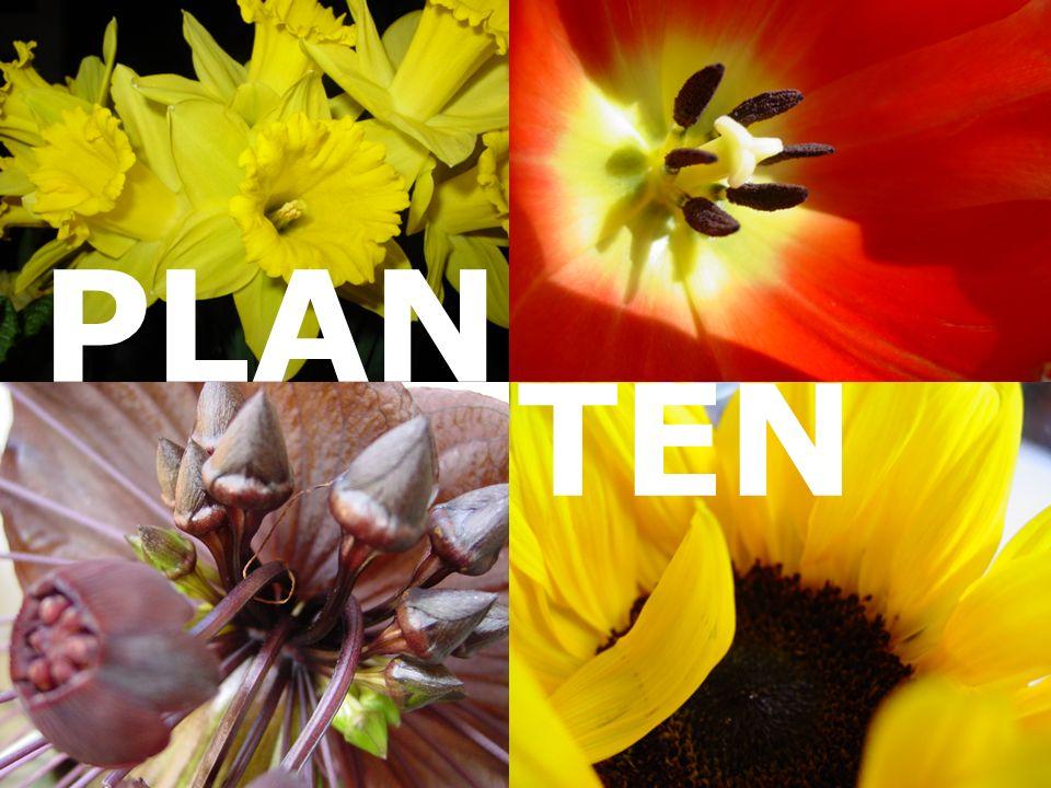 PLAN TEN