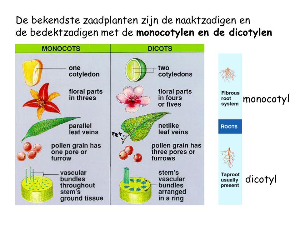 De bekendste zaadplanten zijn de naaktzadigen en