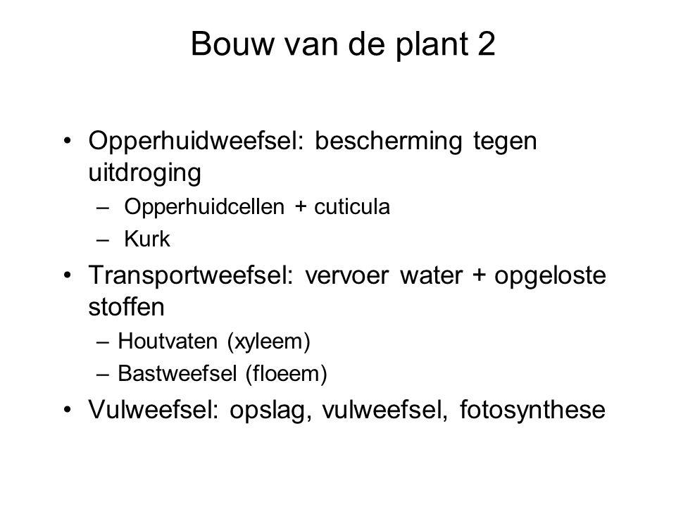Bouw van de plant 2 Opperhuidweefsel: bescherming tegen uitdroging