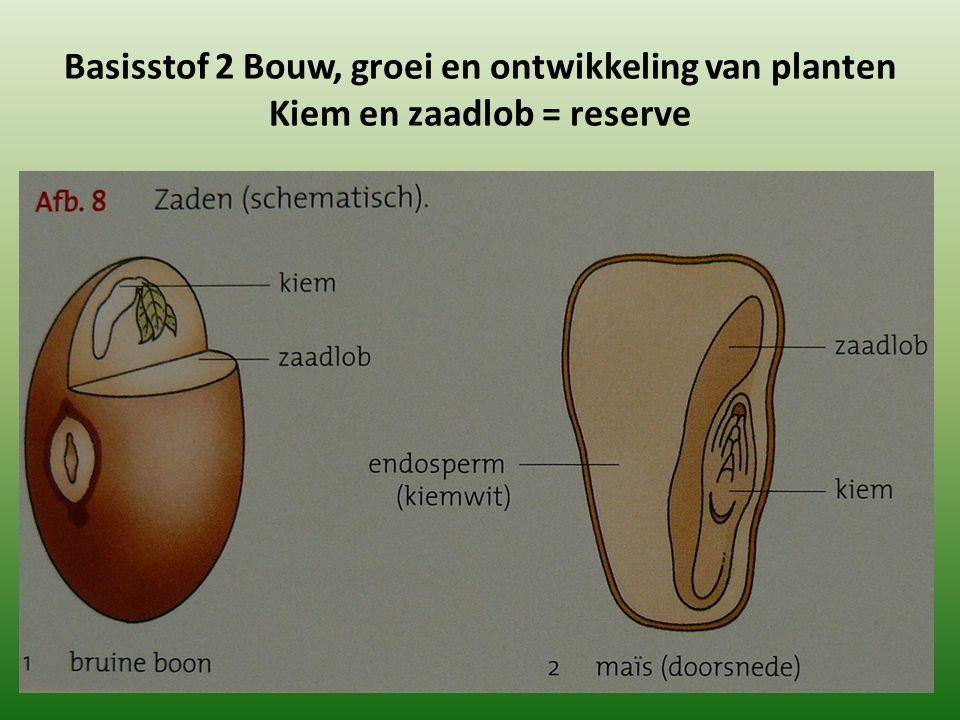 Basisstof 2 Bouw, groei en ontwikkeling van planten Kiem en zaadlob = reserve