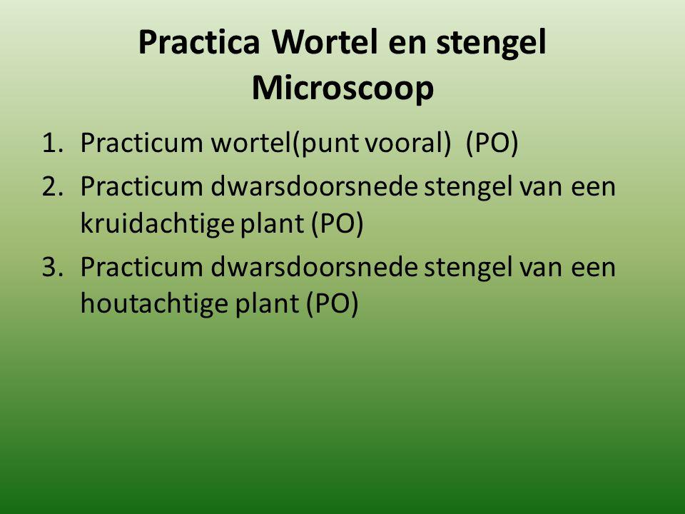 Practica Wortel en stengel Microscoop