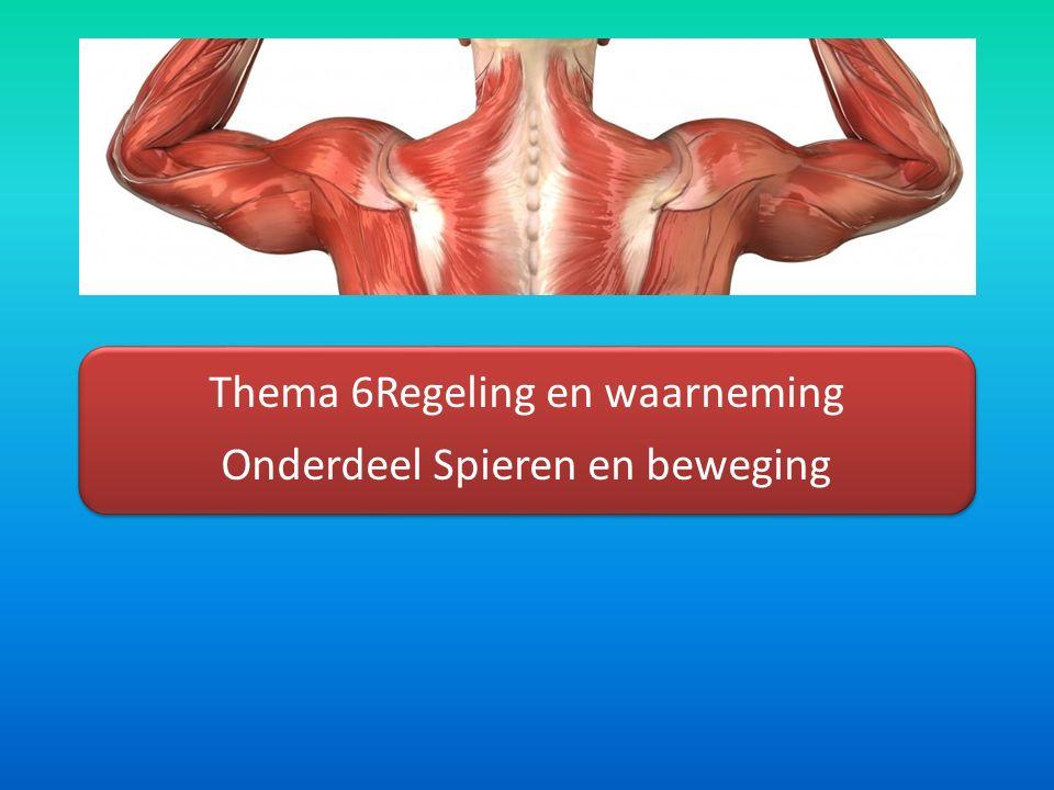Thema 6Regeling en waarneming Onderdeel Spieren en beweging