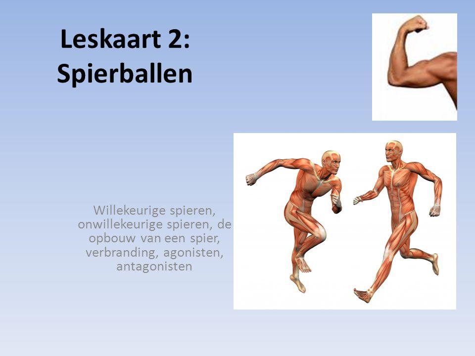 Leskaart 2: Spierballen