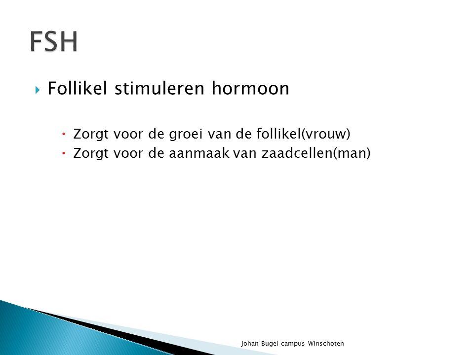 FSH Follikel stimuleren hormoon