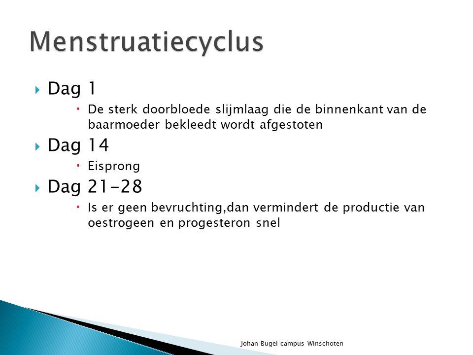 Menstruatiecyclus Dag 1 Dag 14 Dag 21-28
