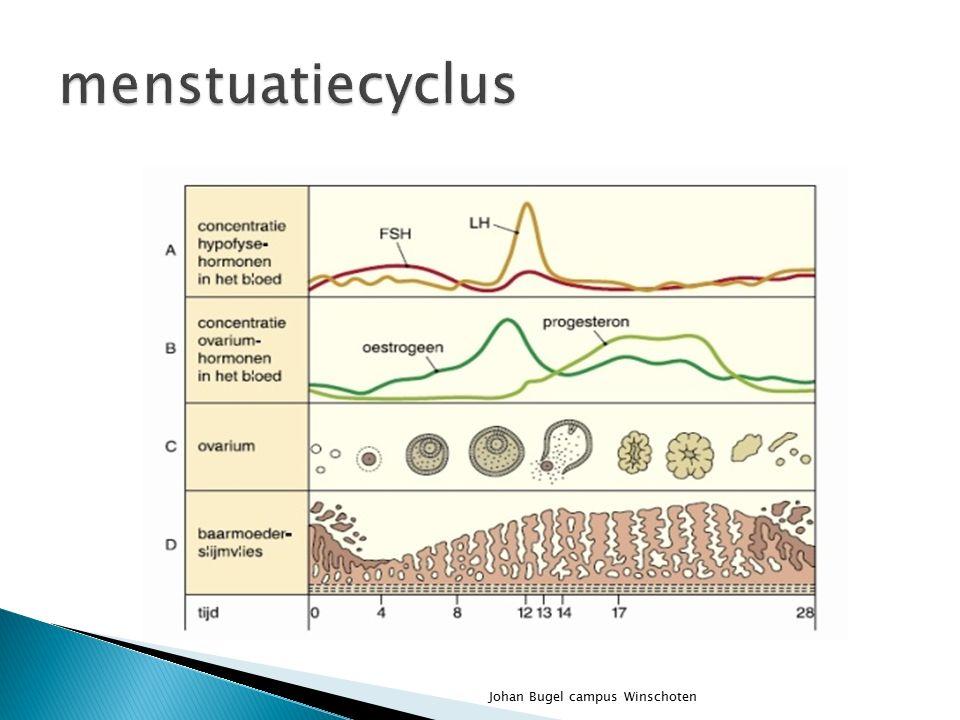 menstuatiecyclus Johan Bugel campus Winschoten