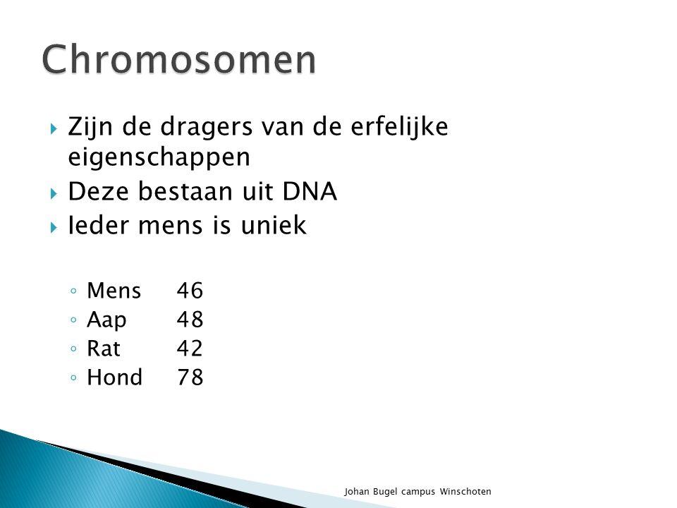 Chromosomen Zijn de dragers van de erfelijke eigenschappen