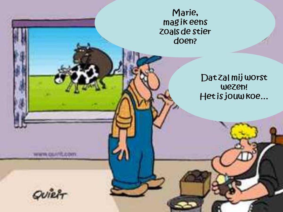 Marie, mag ik eens zoals de stier doen Dat zal mij worst wezen! Het is jouw koe…
