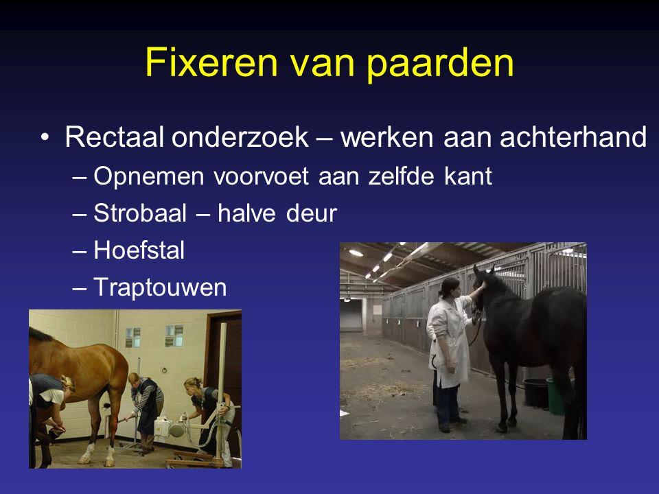 Fixeren van paarden Rectaal onderzoek – werken aan achterhand