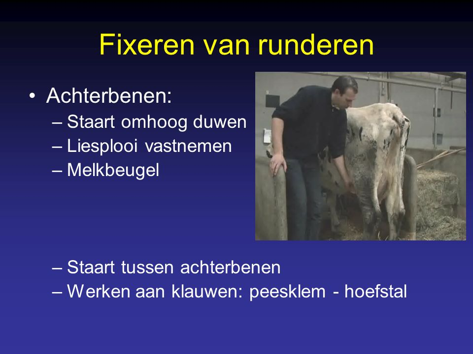 Fixeren van runderen Achterbenen: Staart omhoog duwen
