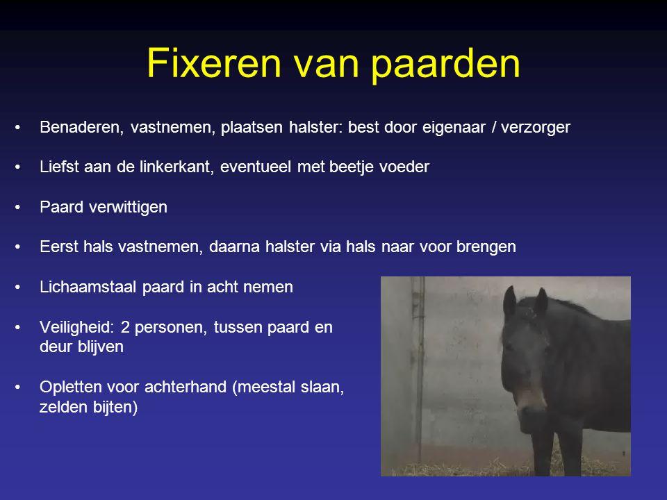 Fixeren van paarden Benaderen, vastnemen, plaatsen halster: best door eigenaar / verzorger. Liefst aan de linkerkant, eventueel met beetje voeder.