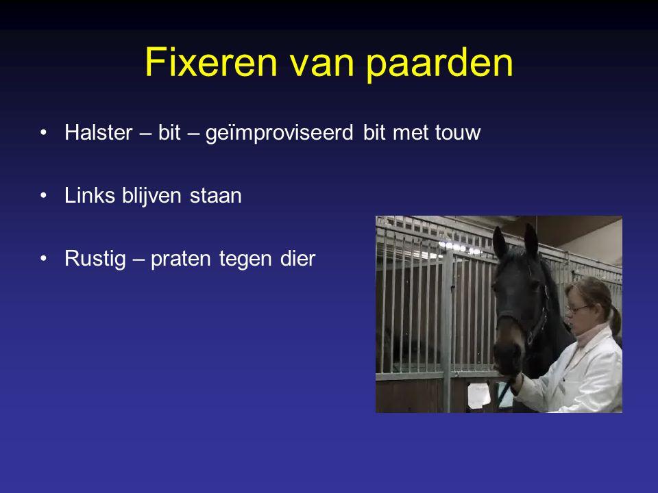Fixeren van paarden Halster – bit – geïmproviseerd bit met touw