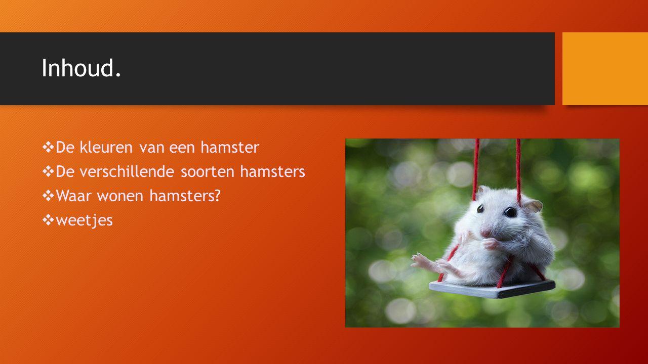 Inhoud. De kleuren van een hamster De verschillende soorten hamsters