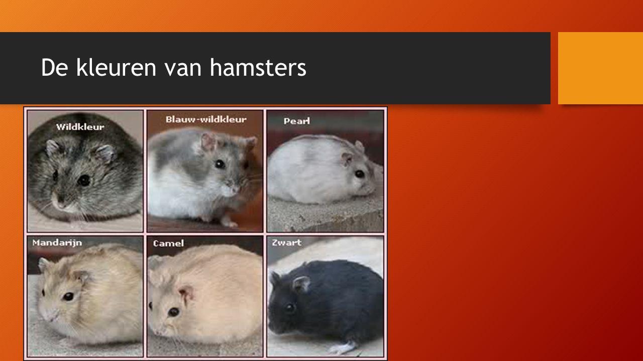 De kleuren van hamsters