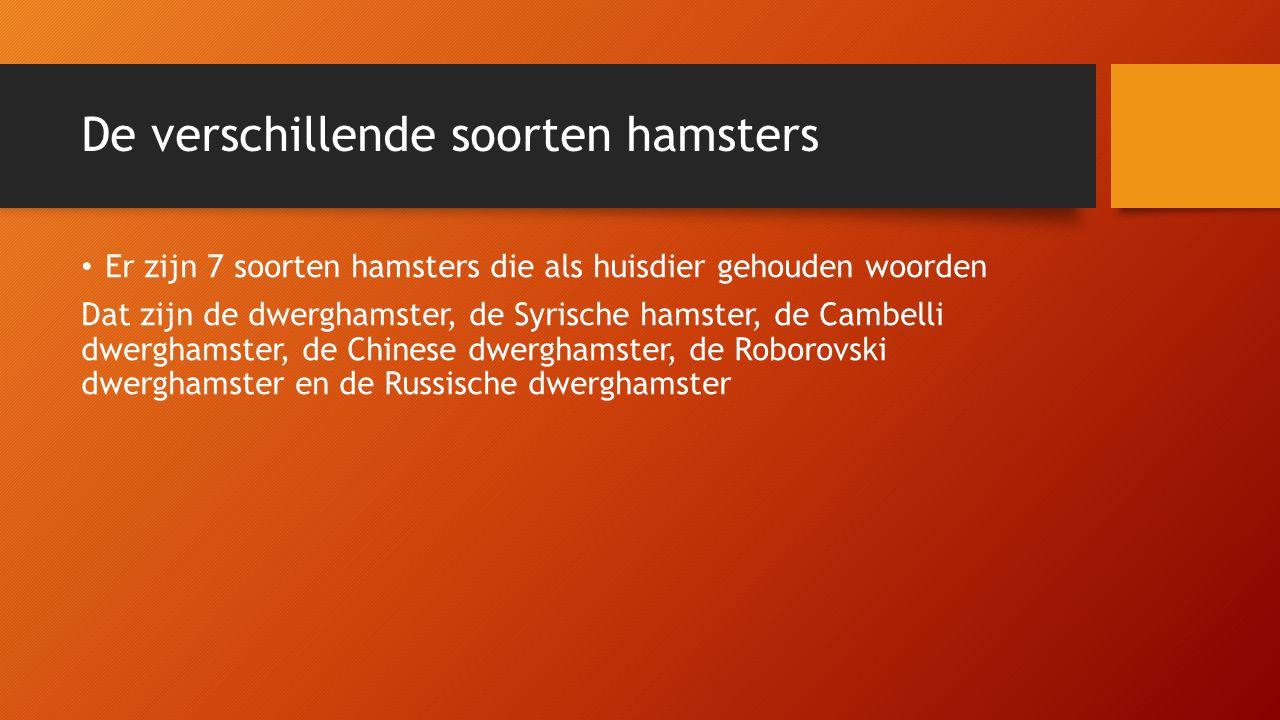 De verschillende soorten hamsters