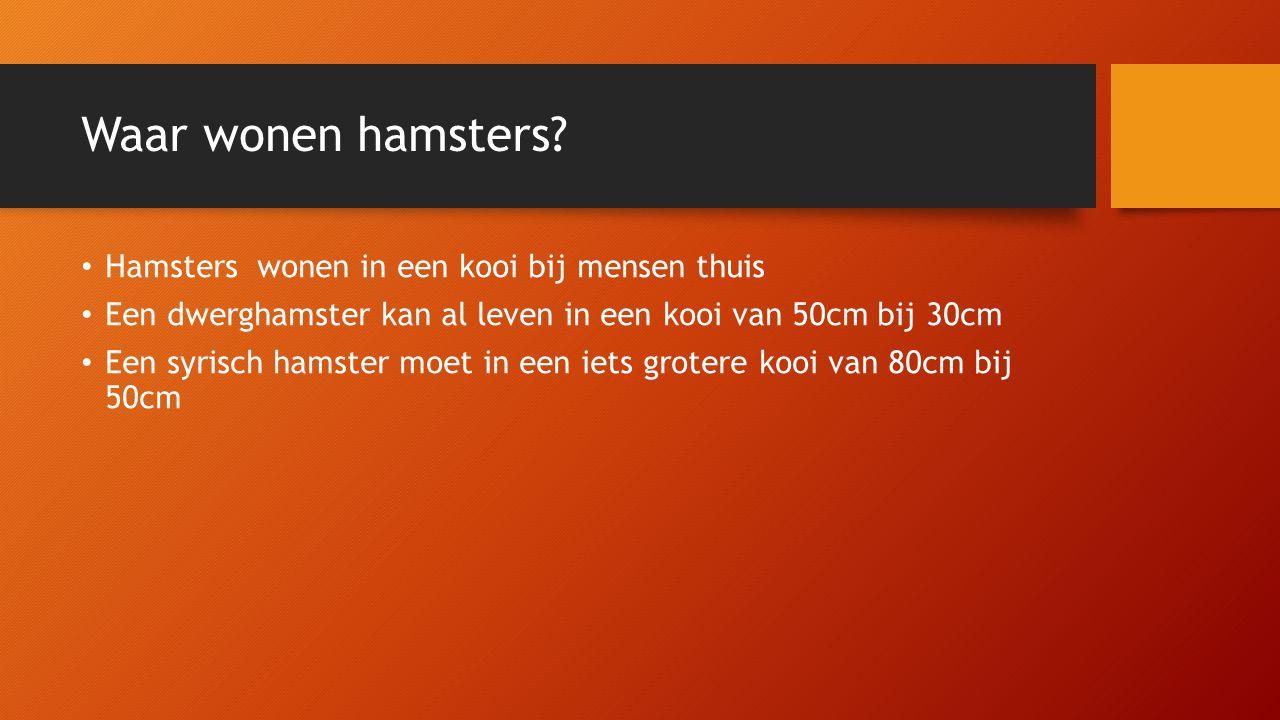 Waar wonen hamsters Hamsters wonen in een kooi bij mensen thuis