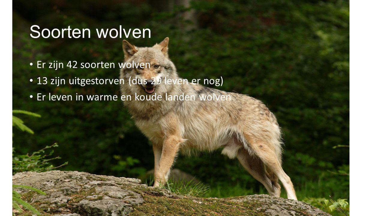 Soorten wolven Er zijn 42 soorten wolven