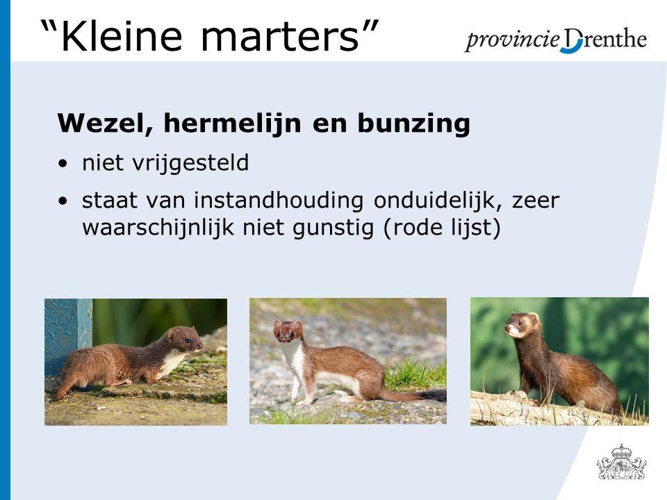 Kleine marters Wezel, hermelijn en bunzing niet vrijgesteld