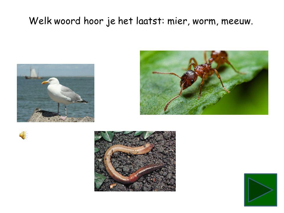 Welk woord hoor je het laatst: mier, worm, meeuw.