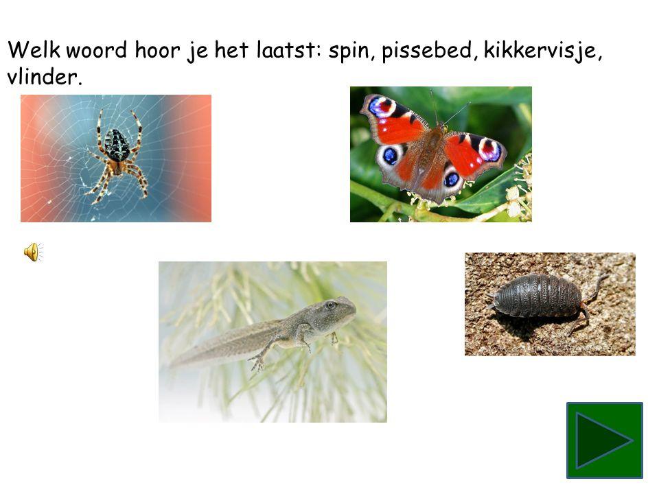 Welk woord hoor je het laatst: spin, pissebed, kikkervisje,