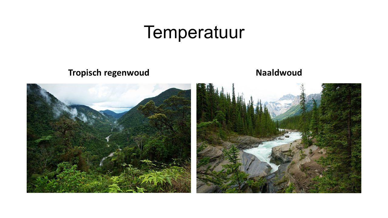Temperatuur Tropisch regenwoud Naaldwoud