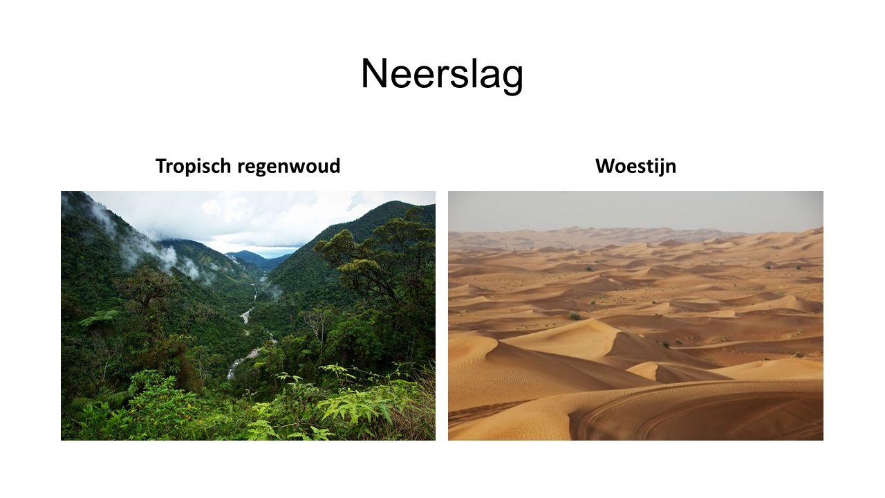 Neerslag Tropisch regenwoud Woestijn