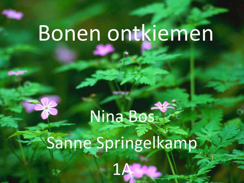 Nina Bos Sanne Springelkamp 1A