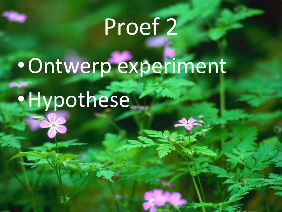 Proef 2 Ontwerp experiment Hypothese