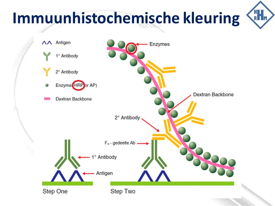Immuunhistochemische kleuring