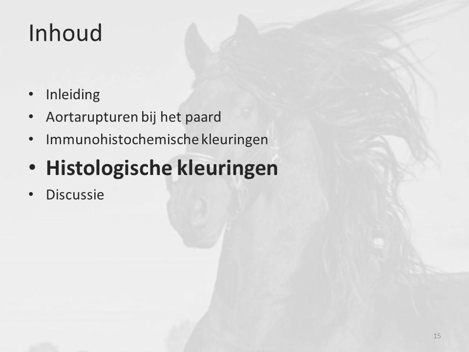 Inhoud Histologische kleuringen Inleiding Aortarupturen bij het paard