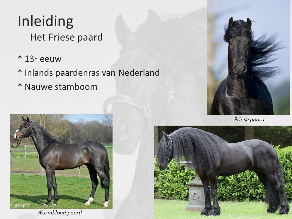 Inleiding Het Friese paard